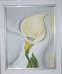 Blumen, Kalla, Weiß, Malerei