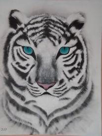 Tiere, Tiger, Augen, Weiß