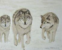 Winter, Schnee, Wolf, Tiere