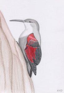 Vogel, Natur, Zeichnung, Zeichnungen