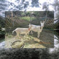 Tiere, Hund, Natur, Digitale kunst