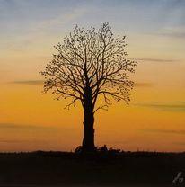Sonnenuntergang, Baum, Müll, Malerei