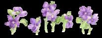 Studie, Blumen, Natur, Veilchen