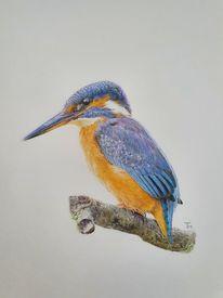 Naturstudie, Vogel, Vogelzeichnung, Natur