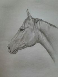 Zeichnung, Pferde, Bleistiftzeichnung, Portrait