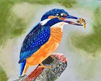 Vogel, Pastellmalerei, Eisvogel blau, Herkules eisvogel