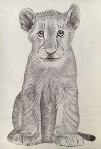Junger löwe, Kugelschreiber auf zeichnungspapier, Zeichnung, Zeichnungen