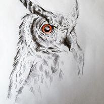 Augen, Eule, Kugelschreiber, Zeichnen
