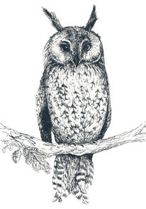 Natur, Tiere, Federzeichnung, Vogel
