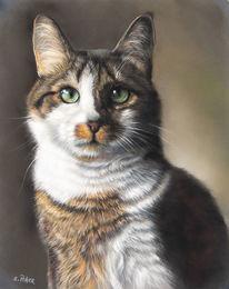 Dreifarbig, Katze, Katzenportrait, Fell