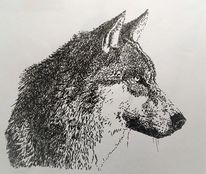 Wild, Federzeichnung, Tiere, Nase