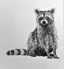 Federzeichnung, Waschbär, Zeichnungen