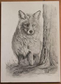 Bleistiftzeichnung, Fuchs, Winterpelz, Wald