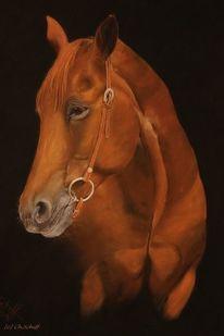Pferde, Fuchs, Pastellmalerei, Zeichnungen