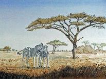 Akazie, Zebra, Afrika, Steppe
