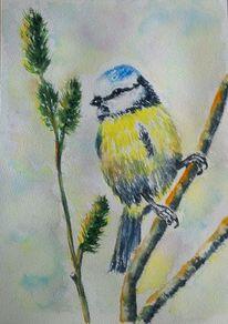 Vogel, Blau, Blaumeise, Gelb