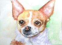 Chihuahua, Aquarellmalerei, Tierportrait, Tiere