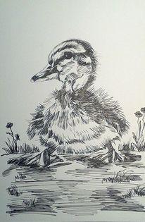 Tiere, Schwarz, Zeichnung, Ente