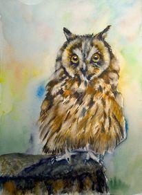Aquarellmalerei, Tiere, Natur, Vogel