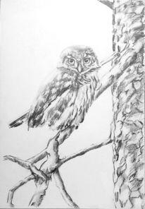 Baum, Tierportrait, Tiere, Vogel