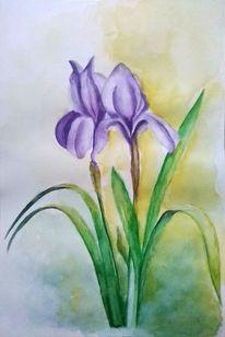 Blumen, Iris, Aquarellmalerei, Pflanzen