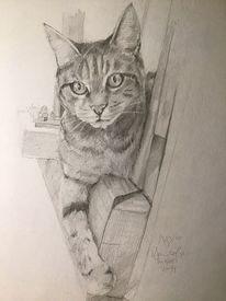 Zeichnen, Tiere, Katze, Bleistiftzeichnung