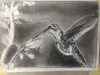 Kolibri, Schwerelos, Bleistiftzeichnung, Zeichnungen