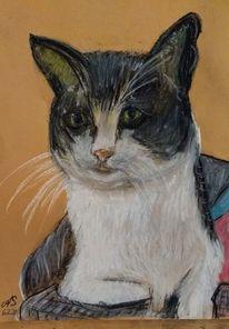 Tiere, Kreide, Katze, Zeichnungen