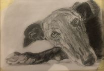 Hund, Blick, Zeichnungen,