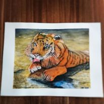 Tiger, Flussufer, Aquarell
