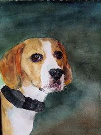 Beagle, Portrait, Hund, Aquarell