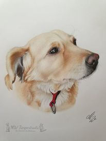 Polychromos, Zeichnung, Hund, Zeichnungen