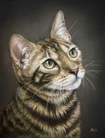 Tierportrait, Tierwelt, Katze, Pastellmalerei