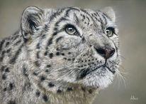 Schneeleopard, Pastellmalerei, Tierwelt, Leopard
