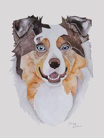 Nach fotovorlage, Aquarellmalerei, Hütehund, Hundeportrait