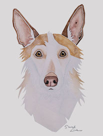 Langhaar, Auftragsarbeit, Tierportrait, Malen