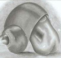Zeichnung, Frau, Muschel, Zeichnungen