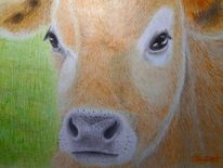 Kuh, Portrait, Kalb, Jersey