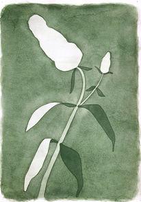 Pflanzen, Aquarellmalerei, Sommerflieder, Blüte