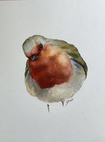 Vogel, Tiere, Aquarellmalerei, Rotkehlchen