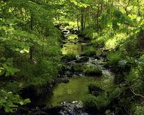Grün, Wasser, Licht, Farben