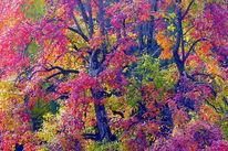 Farben, Licht, Baum, Fotografie