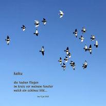 Bewegung, Himmel, Taube, Vogel