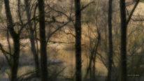 Irreal, Baum, Melancholie, Schatten