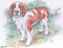 Hund, Welsh springer spaniel, Aquarell,