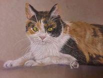 Tiere, Glückskatze, Pastellmalerei, Haustier