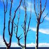 Küste, Baum, Malerei, Weise
