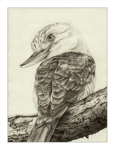 Dacelo leachii, Bleistiftzeichnung, Eisvogel, Vogel, Haubenliest, Zeichnungen