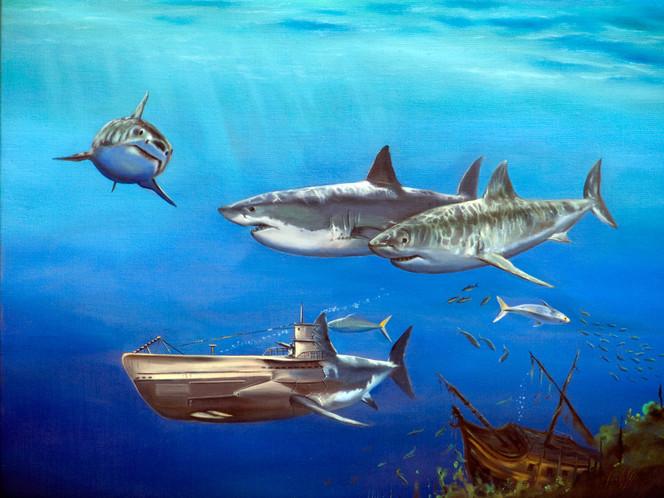 Raubfisch, Wasser, Boot, Realismus, Blau, Hai