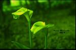 Malta, Pflanzen, Blüte, Grün